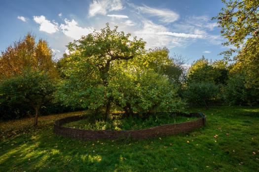 newton-tree
